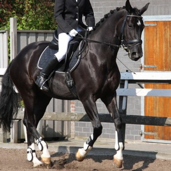 equestrian-1308457_960_720