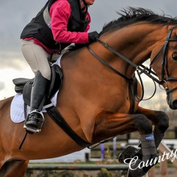showjumping header